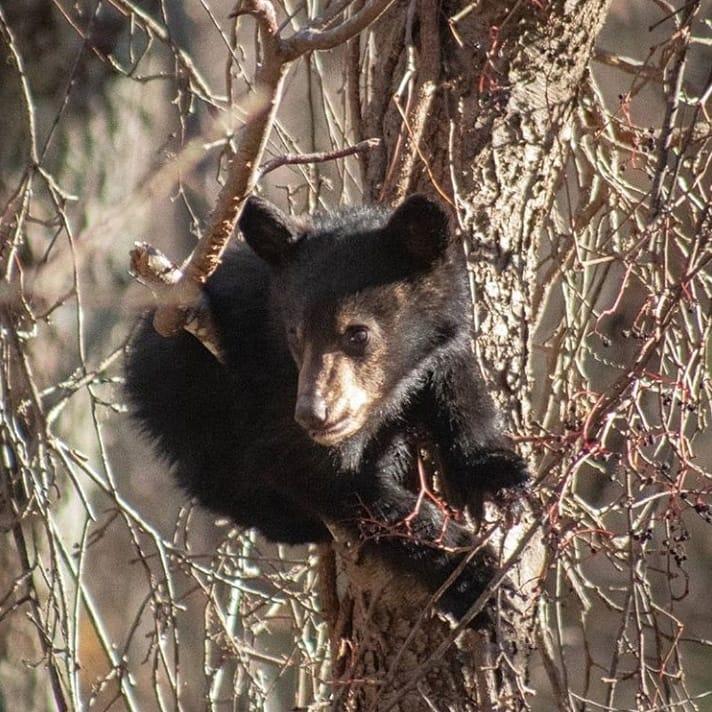 Bear Cub Hikes